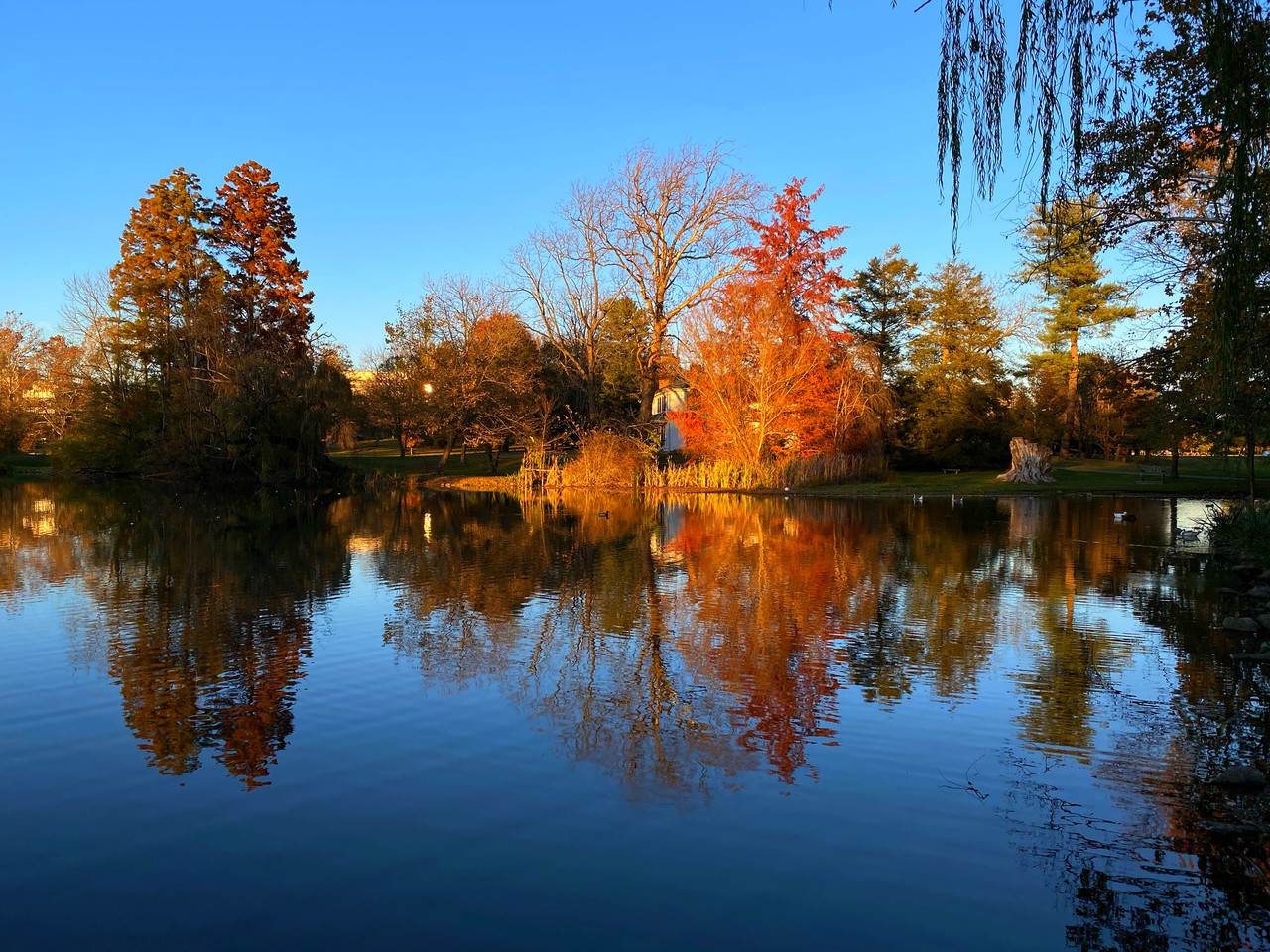 trees reflected in the Duck Pond